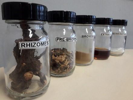 Rhizomex : Régénérer la biodiversité en valorisant les plantes invasives