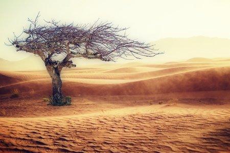 Appel à manifestation d'intérêt : Stratégies d'adaptation et résilience des territoires