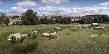[FOCUS FILIÈRE] Recréer une filière locale à partir des traditions lainières